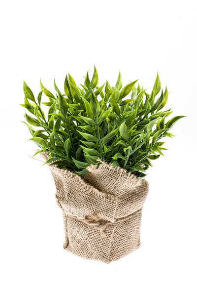 Ruscus Bush in Jute Pot - 20cm