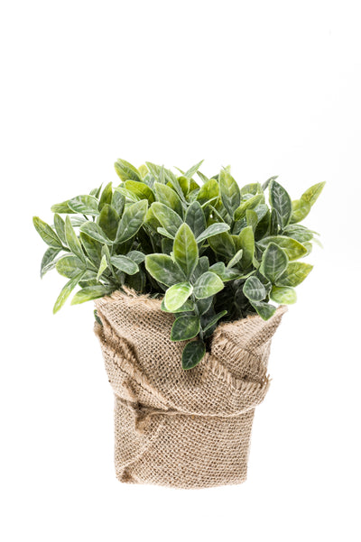 Mint Bush in Jute Pot - 19cm