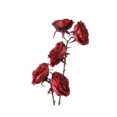 Oxblood Rose Branch - 58cm