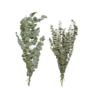 Dried Eucalyptus Bundle - 70cm (Natural Green)