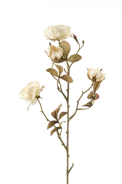 Dry Look Cabbage Rose Spray - 58cm (Cream)