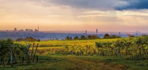 Along the quaint Viennese Wine trail, Austria's oldest wine region