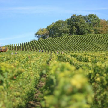 To Sparkling Sussex on the UK Wine Trail