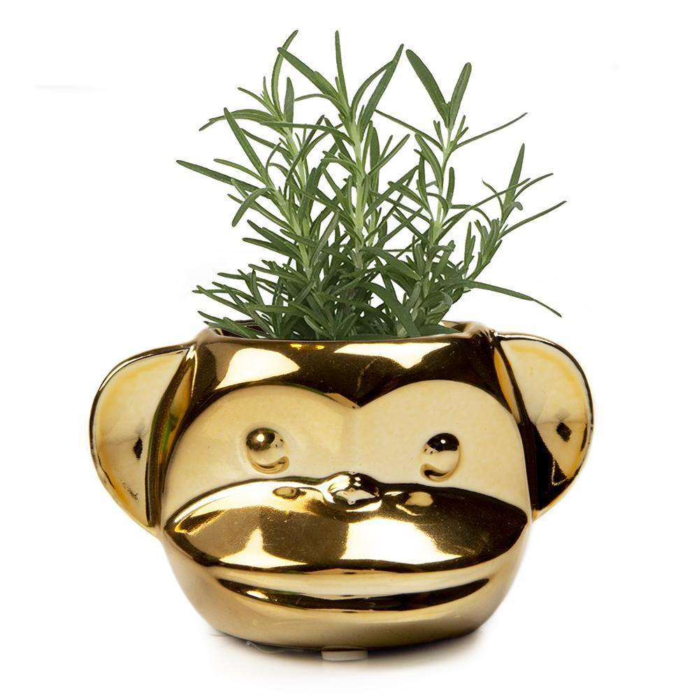 Funky Monkey Pot, 2.5in, Gold