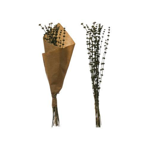 Decorative Dried Natural Henbane Bunch, 23.5in - Floral Acres Greenhouse & Garden Centre