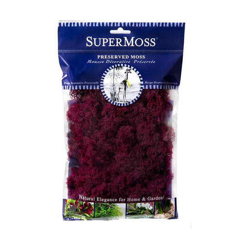Reindeer Moss, Wine, Preserved - Floral Acres Greenhouse & Garden Centre