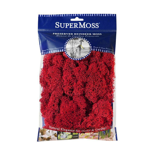 Reindeer Moss, Red, Preserved - Floral Acres Greenhouse & Garden Centre