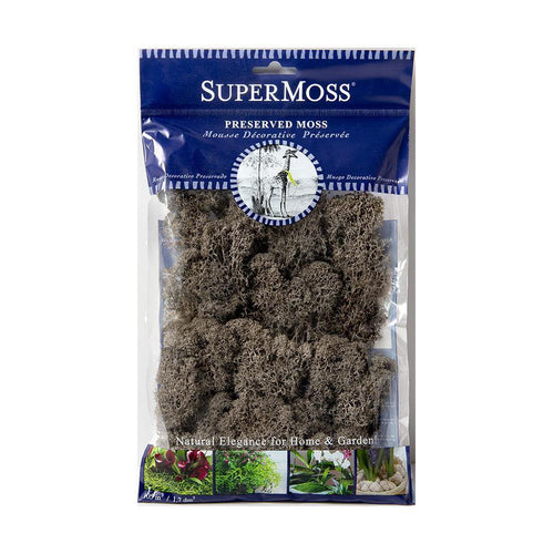 Reindeer Moss, Cashmere, Preserved - Floral Acres Greenhouse & Garden Centre