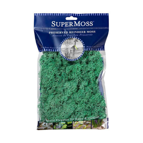 Reindeer Moss, Mint, Preserved - Floral Acres Greenhouse & Garden Centre