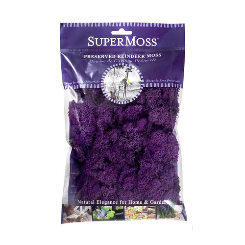 Reindeer Moss, Purple, Preserved - Floral Acres Greenhouse & Garden Centre
