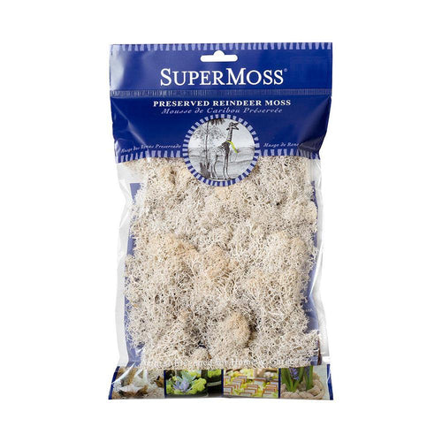 Reindeer Moss, White, Preserved - Floral Acres Greenhouse & Garden Centre