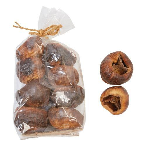 Dried Natural Palmyra Fruit - Floral Acres Greenhouse & Garden Centre
