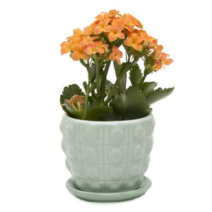 Pot & Saucer, Convex - Floral Acres Greenhouse & Garden Centre