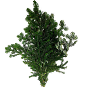 Fresh-cut Boughs, Pine, 3lb, Bunch