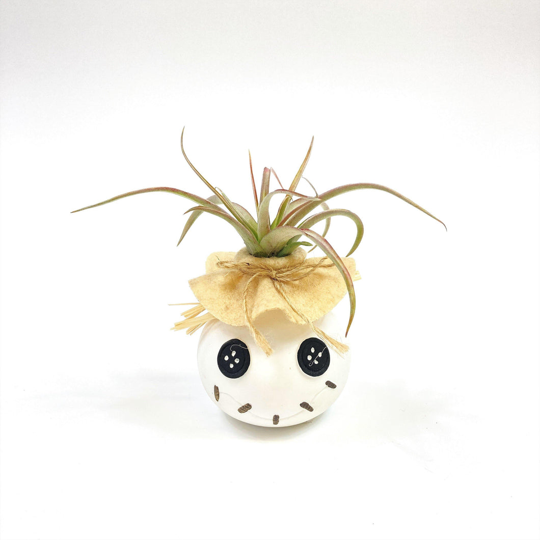 Button Eye Joe Tillandsia Planter - Floral Acres Greenhouse & Garden Centre