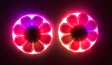 LED pasties daisy nipple covers by Sasswear
