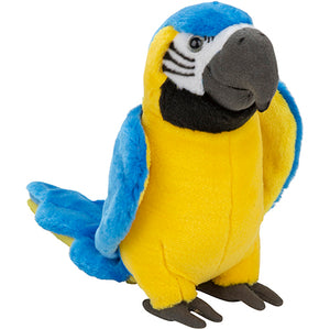 Plan L Blue and Gold Macaw