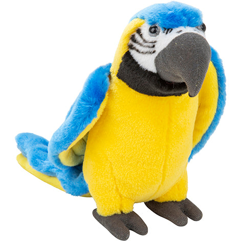 Plan M Blue and Gold Macaw