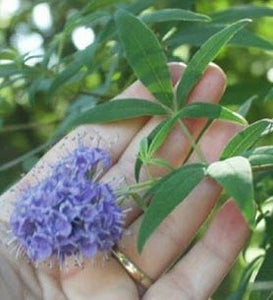 VITEX BENEFITS