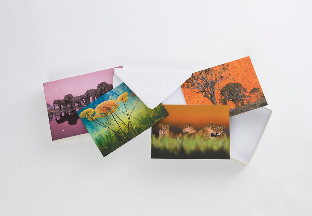 Into Africa: Blank Boxed Notecards