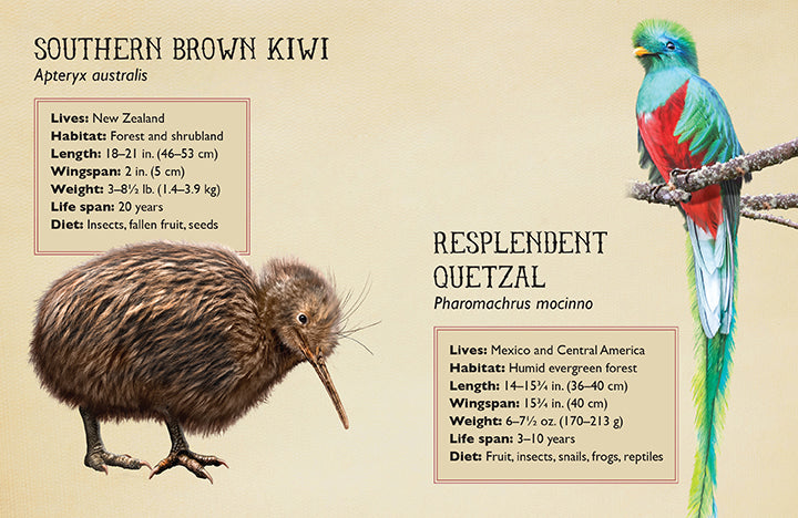 Field Guide to Magnificent Birds