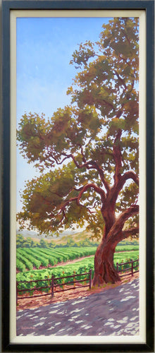 Oak tree and Napa Valley Vineyard, dappled light