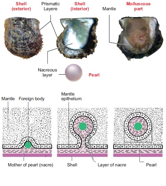 how a pearl is made