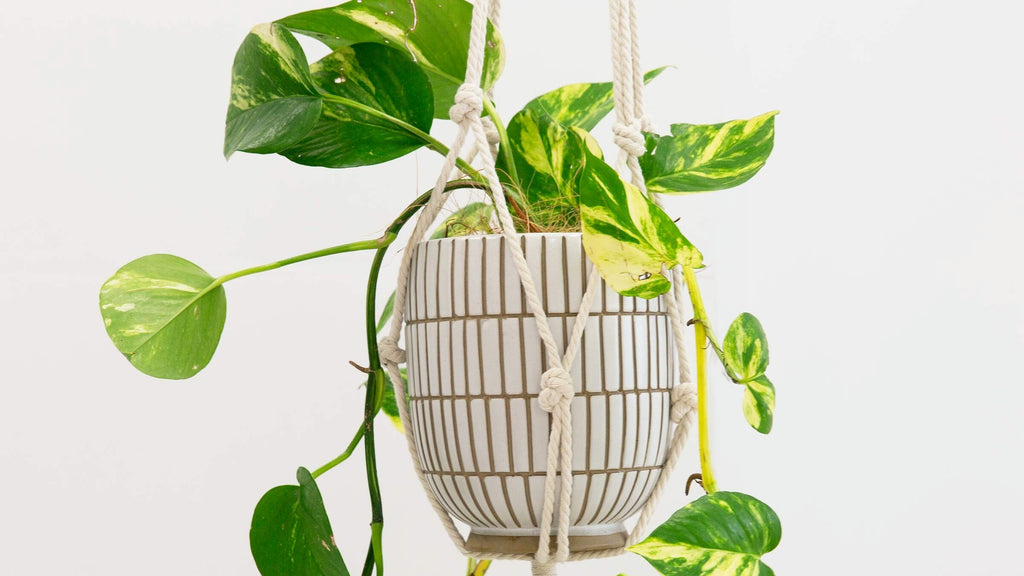 How to Make a Plant Hanger