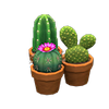 Mini-Cactus Set