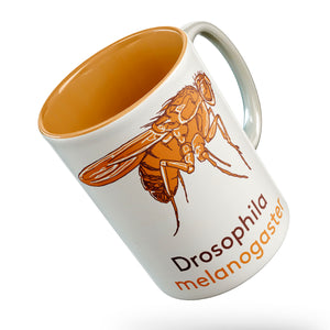 Drosophila fly mug - Boutique Science