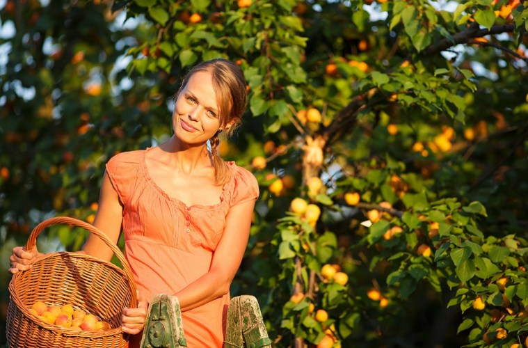 date activities fruit picking peach fruit orchard