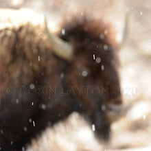 Load image into Gallery viewer, snowy bison