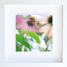 Load image into Gallery viewer, echinacea