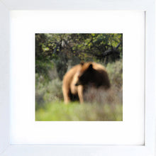 Load image into Gallery viewer, grizzly