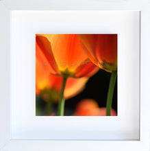 Load image into Gallery viewer, orange blossoms