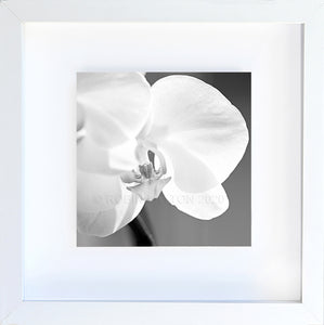 orchid #2 black and white