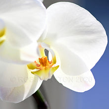 Load image into Gallery viewer, orchid #2