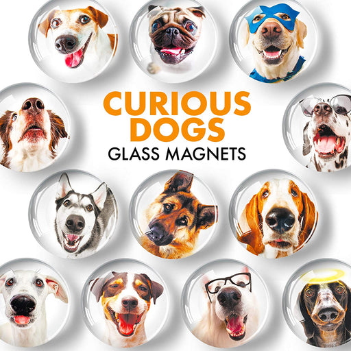 Dogs Glass Magnets - Colorful Magnets - Cute Refrigerator Magnets - Ideal for DIY, Science and Hobby - 12 PCs