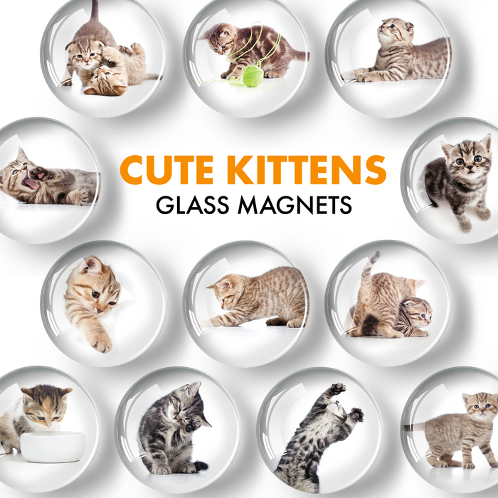 Cat Magnets - Decorative Magnets for Fridge and Whiteboard - Fridge Funny Magnets - Small Round Magnets - 12 PCs