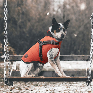 Dog Winter Waterproof Jacket With Harness(BUY 2 FREE SHIPPING)