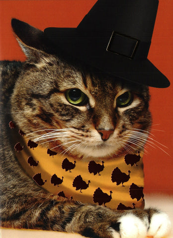 Pilgrim Rodeo Cat Card - Thanksgiving
