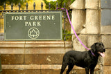 Fort Greene Brooklyn running route, paths