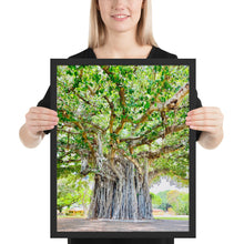 Load image into Gallery viewer, Banyan Tree Nob Hill (Pearl Harbor) Oahu Hawaii Framed poster