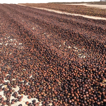 Load image into Gallery viewer, Brazil Sul De Minas Red coffee cherries sundrying on cement patios