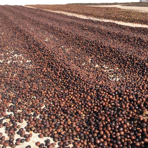 Brazil Sul De Minas Red coffee cherries sundrying on cement patios