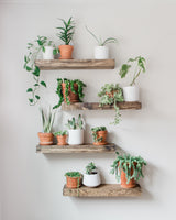 Timber Edge Floating Shelves