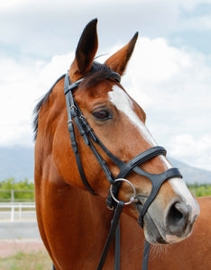 Equi-Boutique Double noseband bridle