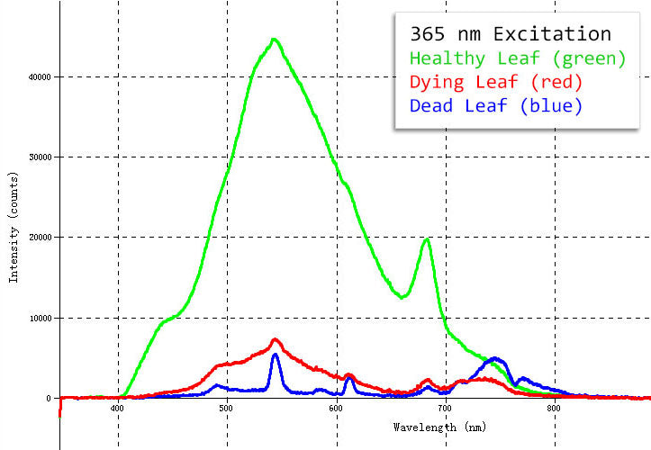 Fluorescence graph comparing healthy, dying and dead leaves