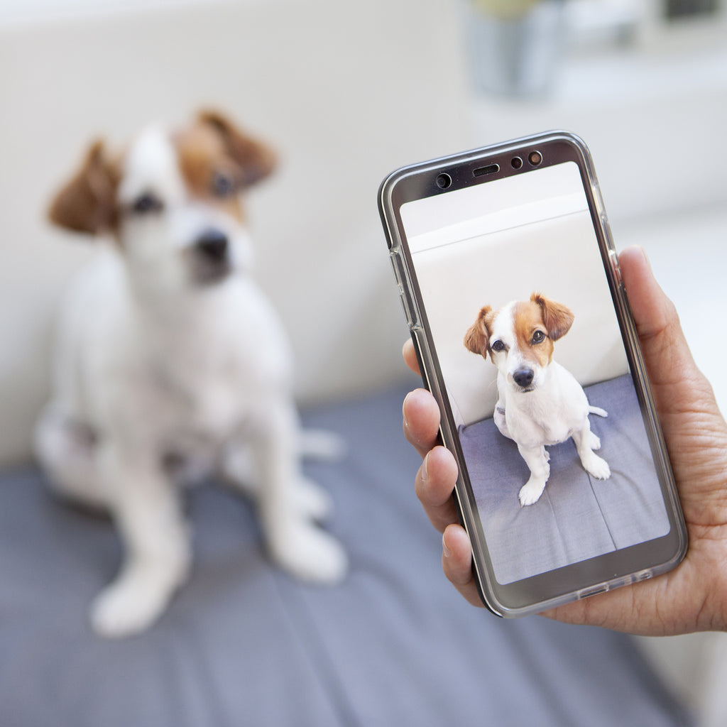 Taking a photo of your pet