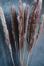 Load image into Gallery viewer, Dried Pampas Grass Bunch
